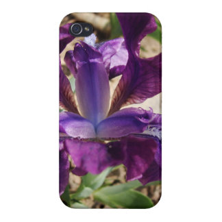 Purple Iris iPhone 4/4S Cases