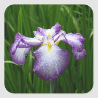 Purple Iris Square Sticker