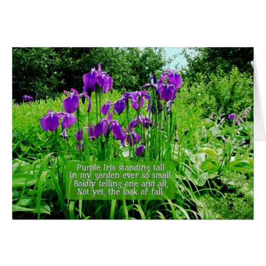 Purple Iris Standing Tall Card