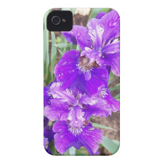Purple Iris with Water Droplets iPhone 4 Cover