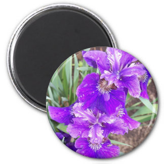 Purple Iris with Water Droplets Magnet