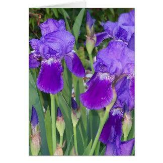 Purple Irises Birthday Card Greeting Cards