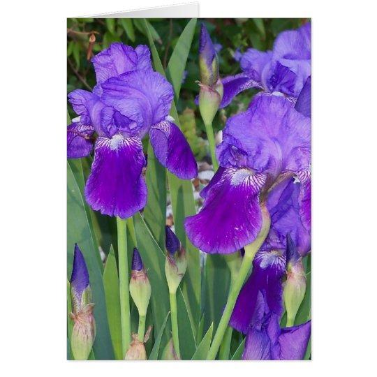 Purple Irises Birthday Card