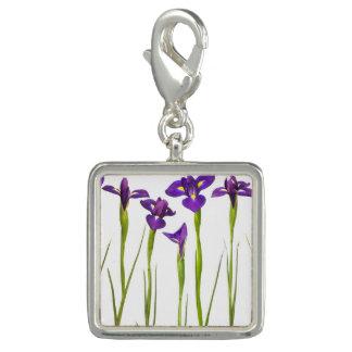 Purple Irises Flower Colorful Iris Flowers Floral