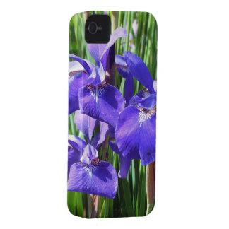 Purple Irises iPhone4 case