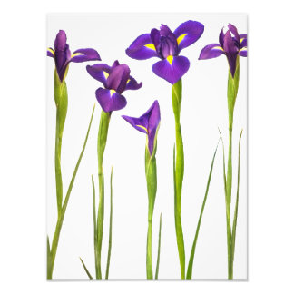 Purple Irises - Iris Flower Customized Template Photo Art