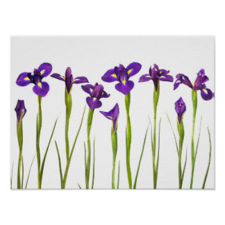 Purple Irises - Iris Flower Customized Template Poster