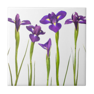 Purple irises isolated on a white background small square tile