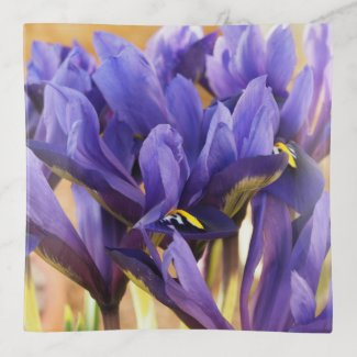 Purple Irises Trinket Tray