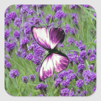 Purple Lavender Butterfly, Square Sticker