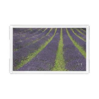 Purple lavender fields near Sault Acrylic Tray