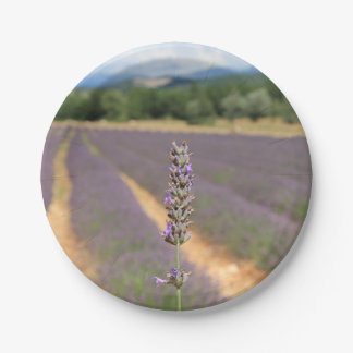 Purple lavender fields near Sault Paper Plate