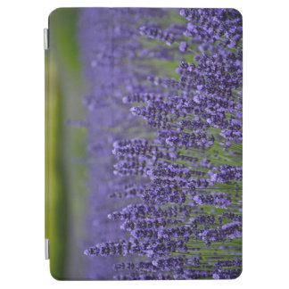 Purple lavender flower garden iPad air cover