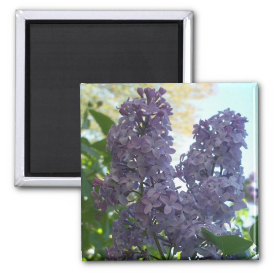 Purple Lilac 8 Magnet