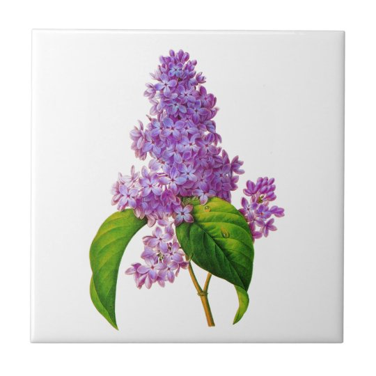 Purple Lilacs by Pierre-Joseph Redoute Small Square Tile