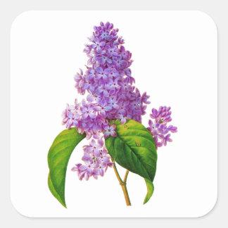 Purple Lilacs by Pierre-Joseph Redoute Square Sticker