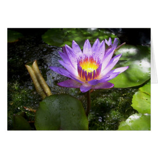 Purple lilly in pond card
