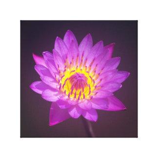 Purple Lotus Flower Canvas Print