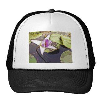 Purple Lotus Flower Drawing Hat