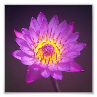 Purple Lotus Flower Photo Art