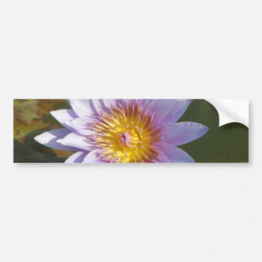 Purple Lotus/Water Lily Bumper Sticker