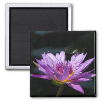 Purple Lotus Waterlily Dragonfly magnet