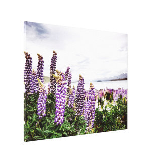 Purple Lupins Flowers : New Zealand Canvas Gallery Wrap Canvas