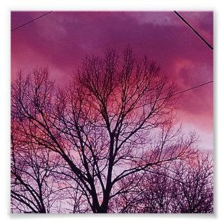 Purple Magenta Skies Photo