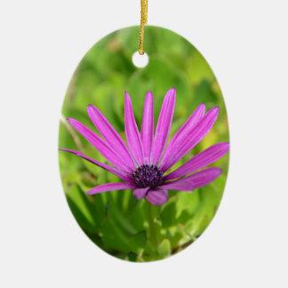 Purple Mesembryanthemum. Christmas Ornament