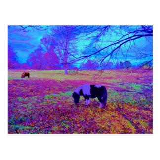 Purple miniature horse postcard
