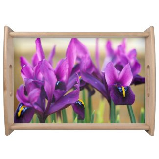 Purple miniature irises serving tray