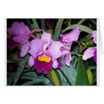 Purple Orchid Cards