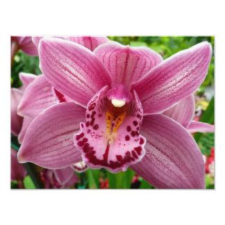 Purple Orchid Elegant Floral Photo