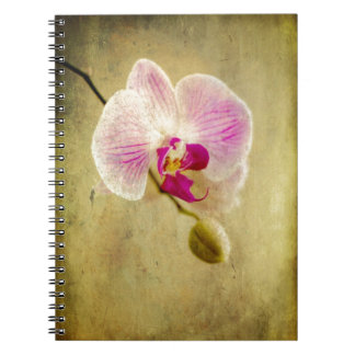 Purple Orchid Floral Flower Aged Antique Notebooks