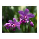 Purple Orchid Flower Postcard
