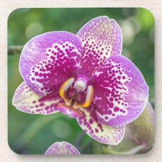Purple orchid hard plastic coasters
