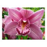 Purple Orchid Photo Print