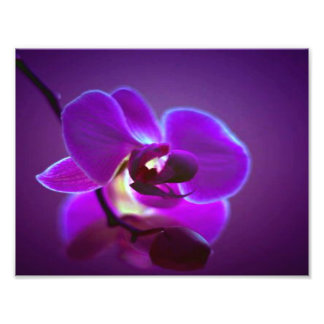 Purple Orchid Photo Print