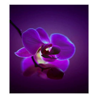 Purple Orchid Poster
