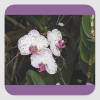 PURPLE ORCHID STICKERS