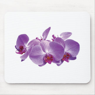 Purple Orchid Trio Mouse Pad