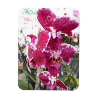 Purple Orchids Magnet