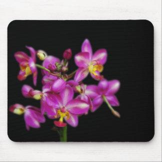 Purple orchids on Black background Mousepad