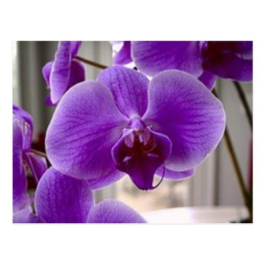 Purple Orchids Postcard