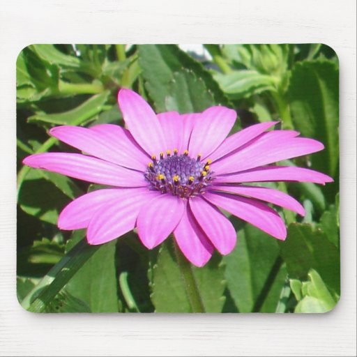 Purple Osteospermum Against Green Leaves Mouse Pad