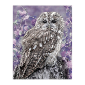Purple Owl picture Acrylic Print
