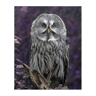 Purple Owl picture Acrylic Wall Art