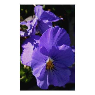 Purple Pansies Photo Art