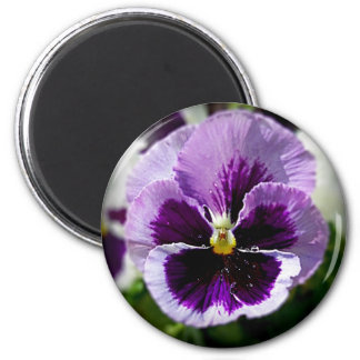Purple Pansy Close Up Magnet