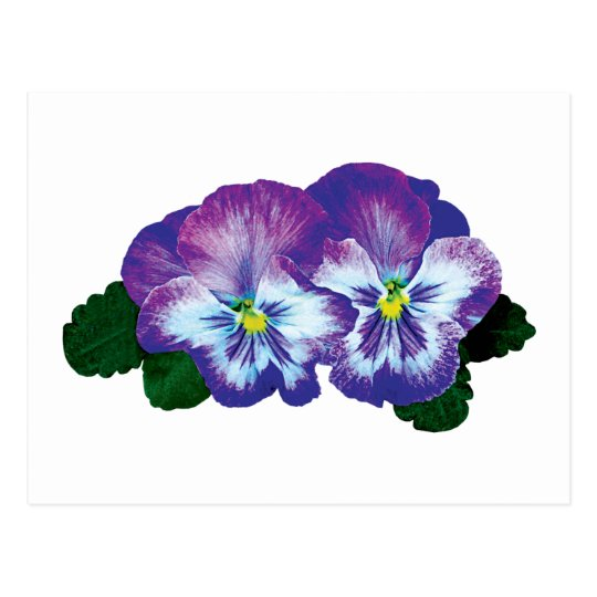 Purple Pansy Duo Postcard